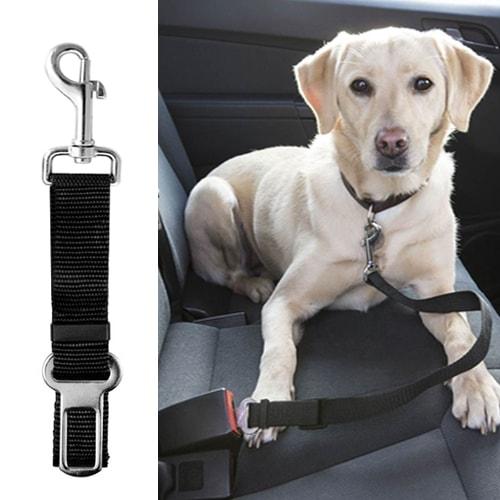 ceinture sécurité chien