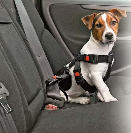 ceinture voiture chien