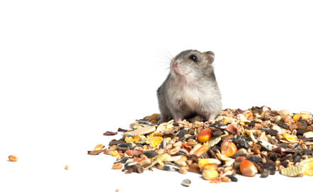 hamster nourriture