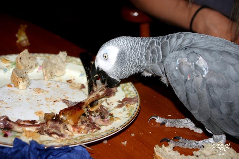 nourriture perroquet