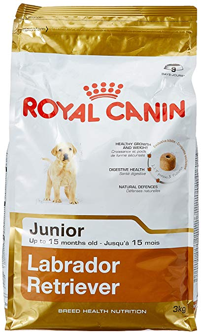 royal canin junior labrador