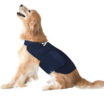 veste chien