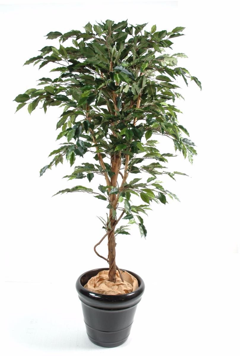 plante synthétique