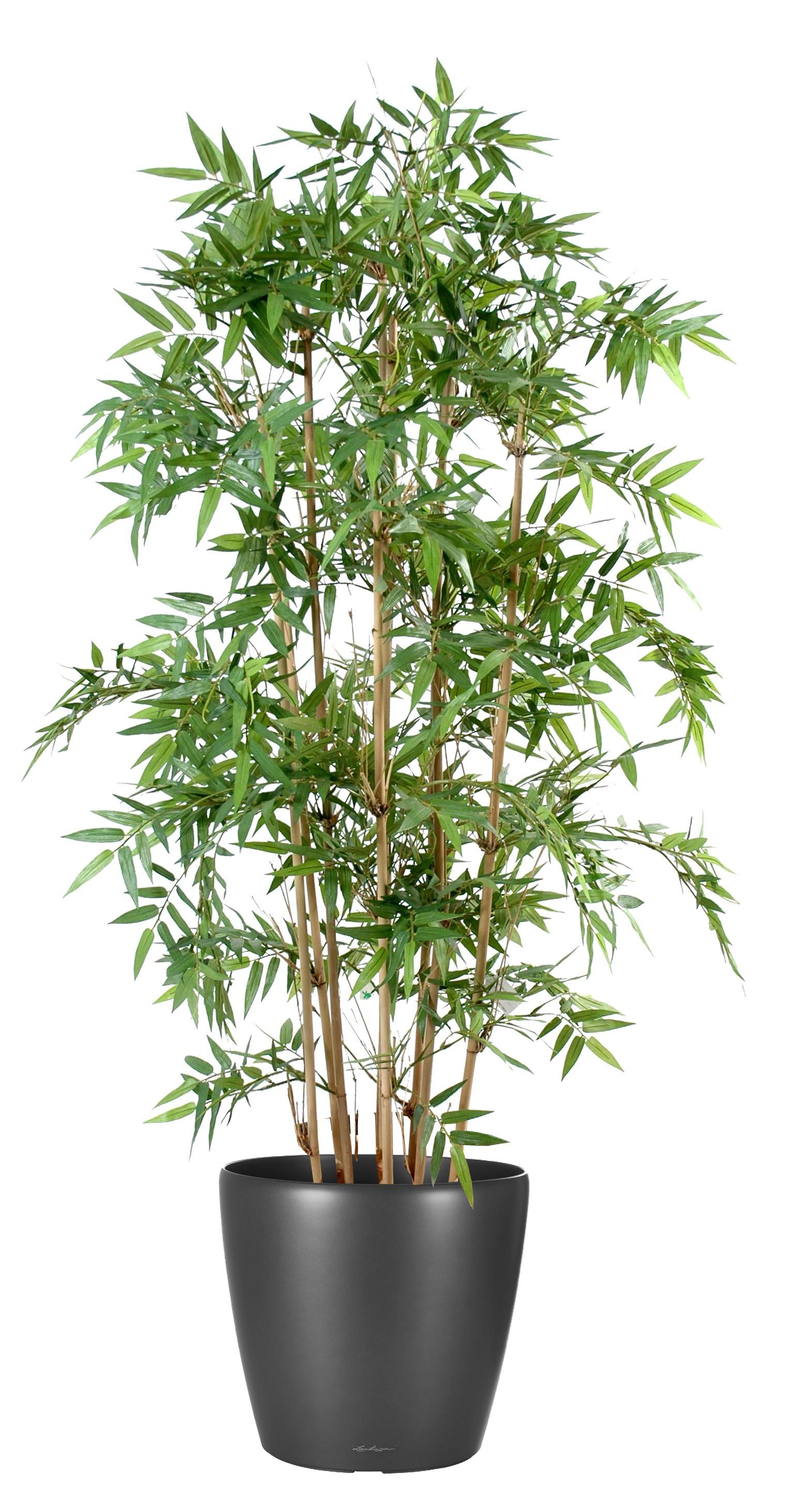 plantes artificielles gifi
